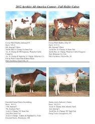 2012 Ayrshire All-America Contest - Fall Heifer Calves