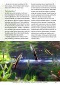 Aponogeton cf. AW 2/2006 - Aqua-Web - Page 6