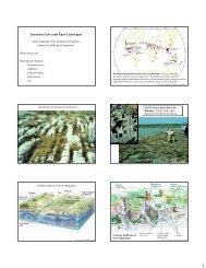 Limestone Caves and Karst Landscapes