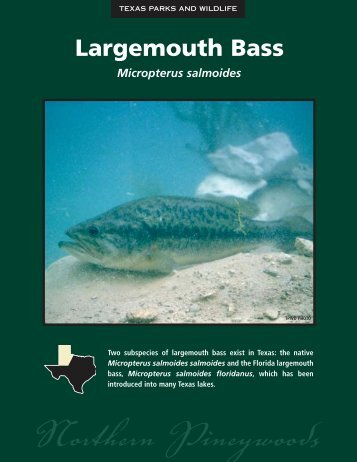 Largemouth Bass - The State of Water