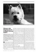 Doggy Rapport nr 3 - Page 5
