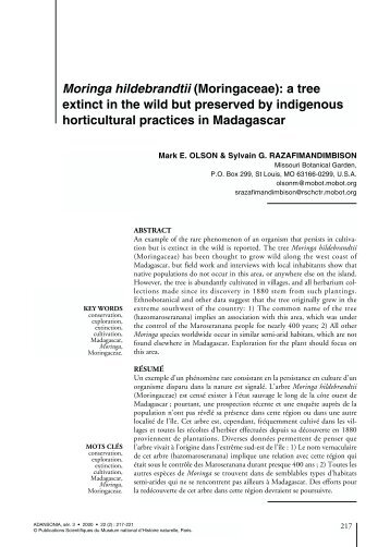 Moringa hildebrandtii (Moringaceae) - Le Muséum national d ...