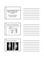Equine Distal Limb - University of Minnesota
