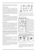 petroglyphen im valle del encanto - StoneWatch - Seite 6