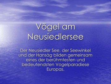 Vögel am Neusiedlersee - GRG23 Alterlaa