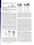 Discovery of a minimal form of RNase P in Pyrobaculum - Page 2