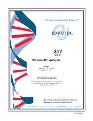 Western Blot Analysis - Frederiksen