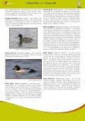 Quel froid de canard! - Natagora - Page 7
