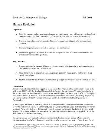 Human Evolution - Mama Indstate