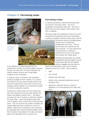 Farrowing sows - Compassion in World Farming