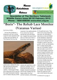"""""""Boris""""- The Rehab Lace Monitor - Northern Tablelands Wildlife Carers"""