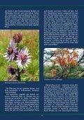 Die Flora des Ostkaps - African Bulbs Homepage - Seite 3