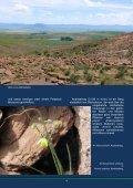Die Flora des Ostkaps - African Bulbs Homepage - Seite 6