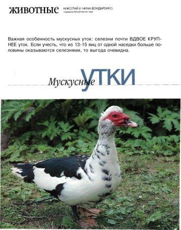 """""""Новый садовод и фермер"""" №1-2 2006 """"Мускусные утки"""""""