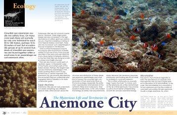 Anemone City - X-Ray Magazine