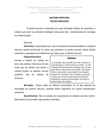SISTEMA NERVOSO - Jairo J. Matozinho Cubas