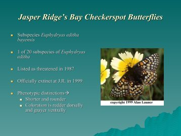 Jasper Ridge's Bay Checkerspot Butterflies