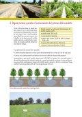AREE FORESTALI DI INFILTRAZIONE - Ideassonline.org - Page 7
