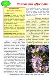 Rosmarinus officinalis - Piante spontanee in cucina