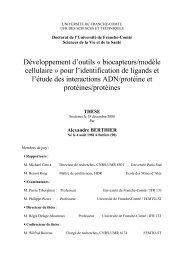 Développement d'outils « biocapteurs/modèle cellulaire » pour l - TEL