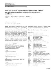 Renal cell apoptosis induced by nephrotoxic drugs: cellular and ...