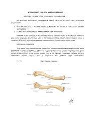 Kosti gornjeg uda_sktipta NS.pdf - Beli Mantil