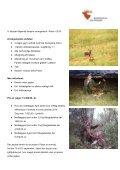 Brunsthjort i Polen - Korsholm Jagtrejser - Page 2