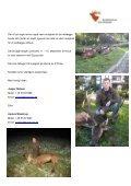 Brunsthjort i Polen - Korsholm Jagtrejser - Page 3