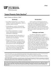 Texas Phoenix palm decline - University of Florida