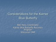Considerations for the Karner Blue Butterfly