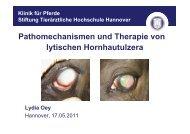 Chirurgische Therapie - Tierärztliche Hochschule Hannover