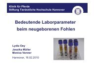 Bedeutende Laborparameter beim neugeborenen Fohlen