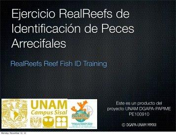 RealReefs Reef Fish ID Training - UNAM