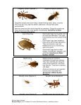 Biodiversity Activity 1 - Kinder Magic - Page 5