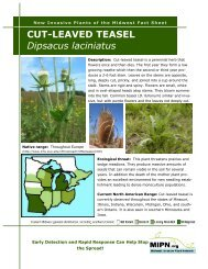 CUT-LEAVED TEASEL Dipsacus laciniatus - Midwest Invasive Plant ...