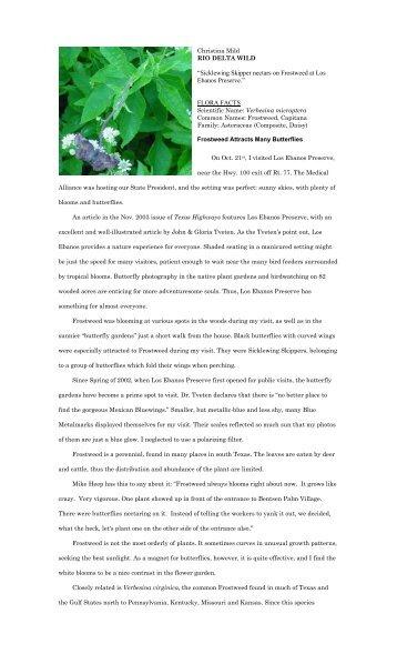 "Verbesina microptera - Christina Mild's ""Rio Delta Wild"""