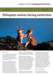Ethiopian wolves facing extinction - People's Trust for Endangered ...