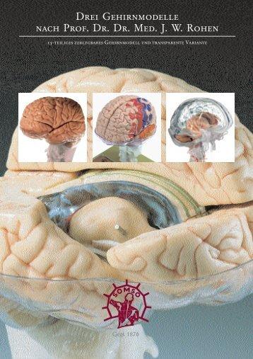 Drei Gehirnmodelle nach Prof. Dr. Dr. Med. J. W. Rohen