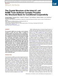 The Crystal Structure of the Intact E.coli RelBE Toxin ...