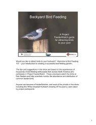 Backyard Bird Feeding - Birds - Cornell Lab of Ornithology