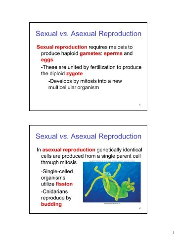 Lgbt definition of asexual propagation
