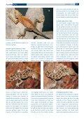 Pakistan – prachtvolle Agamen und seltsame ... - Tropenparadies - Page 2