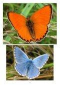 Denní motýli Jihomoravského kraje - 1 - Page 5