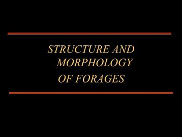 Morphology Lecture