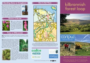 Trees on Kilbrannish How to Get There Standing ... - Carlow Tourism