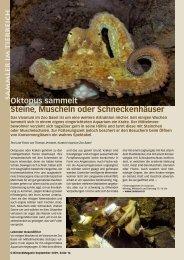Oktopus sammelt Steine, Muscheln oder ... - Birseck Magazin