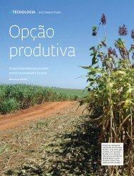 Sorgo é plantado para produzir etanol na entressafra de cana