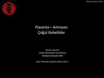 Plasenta, Çoğul Gebelikler - Ankara Üniversitesi Tıp Fakültesi