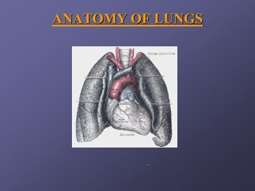 ANATOMY OF LUNGS - The Lung Center