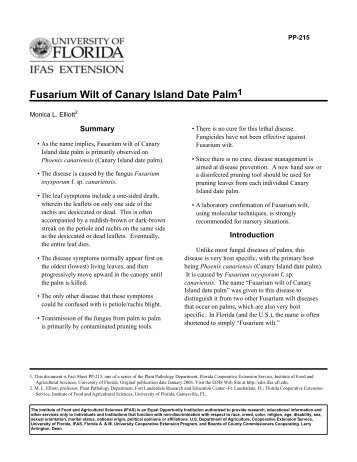 Fusarium Wilt of Canary Island Date Palm1 - University of Florida
